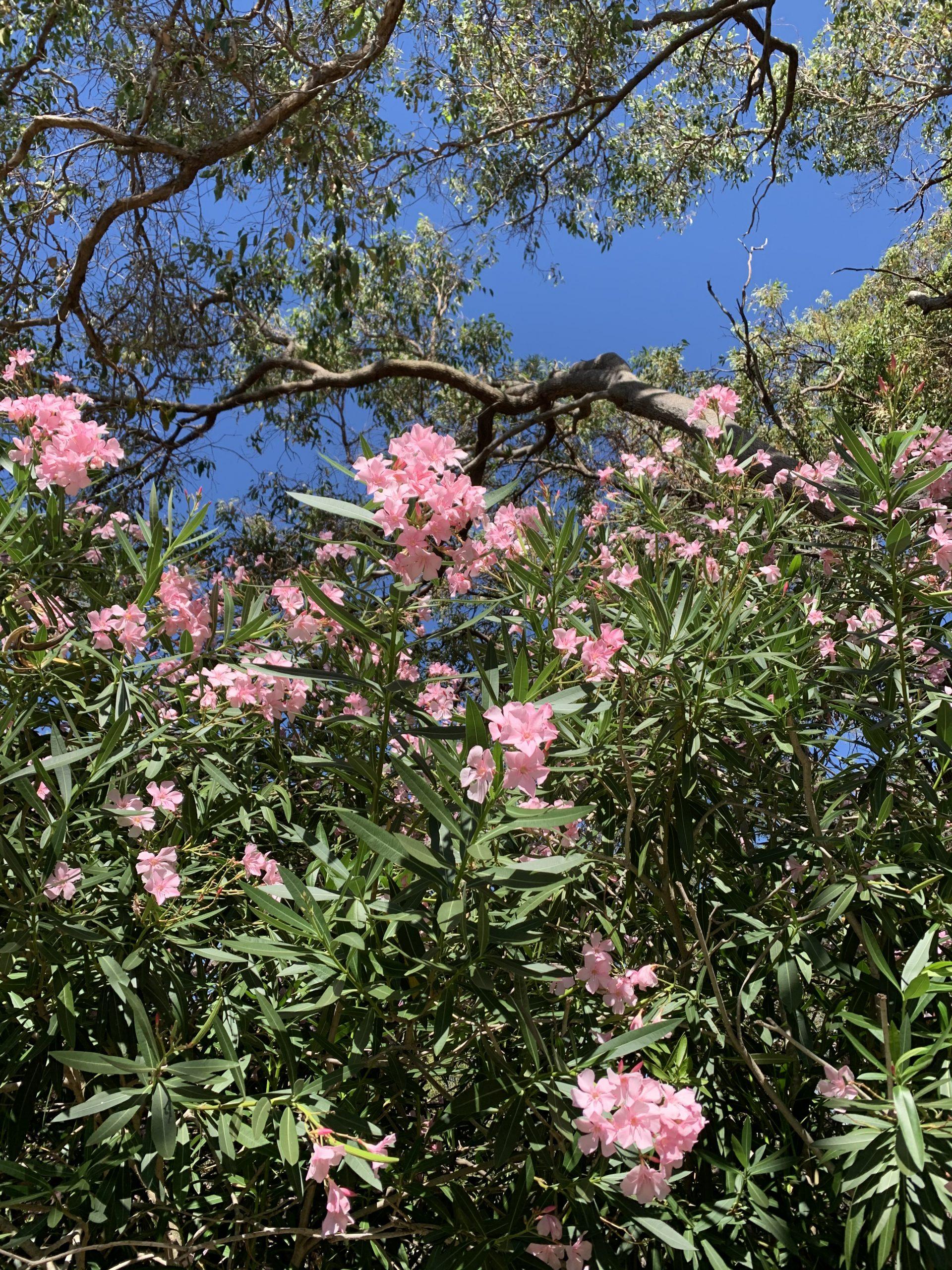 Flower in Australia